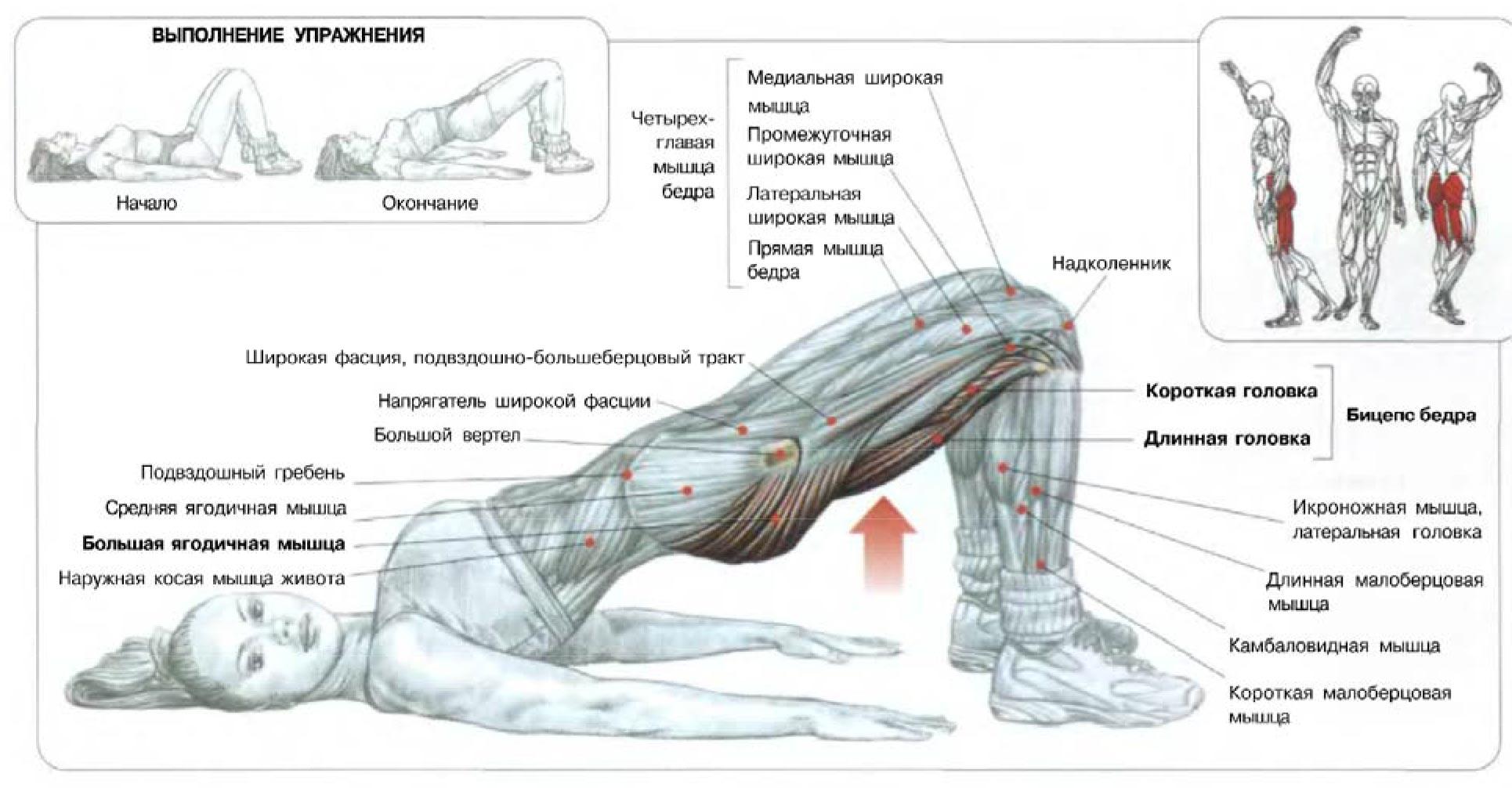 Эффективные упражнения для пресса живота в домашних 92